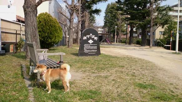 はな散歩1.JPG
