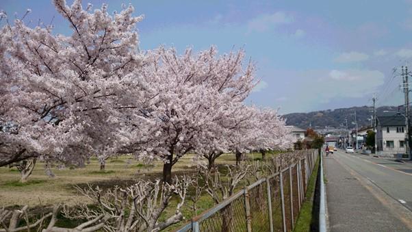 はな散歩4.JPG