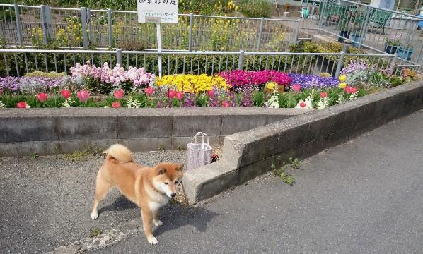 はな散歩5.JPG