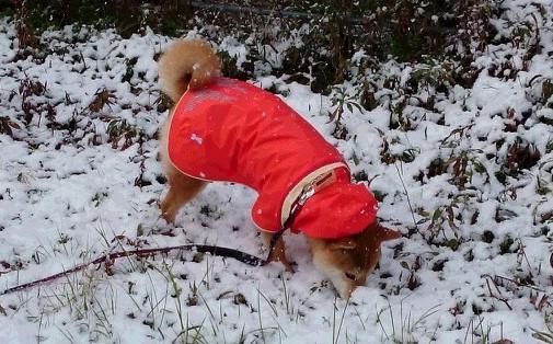 はな4・雪.JPG