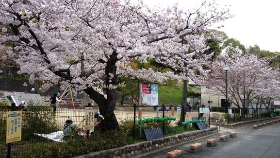 はな8・宮ノ上公園.jpg