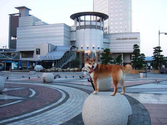タカマツ3・散歩.JPG