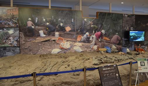 丹波竜6・恐竜化石の産状レプリカ.jpg