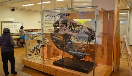 丹波竜7・ティラノサウルス頭部.jpg
