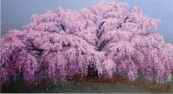 八木1・醍醐寺枝垂桜.jpg