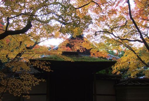大徳15高桐院.jpg