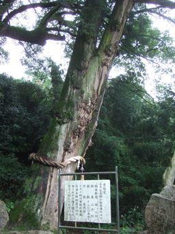 大興寺10・カヤ.JPG