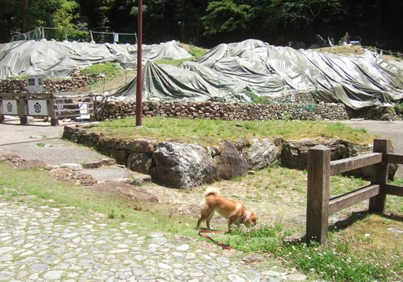 岐阜公園5.JPG