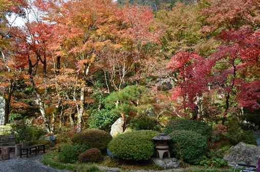 岩瀧寺11・本堂前庭園.jpg