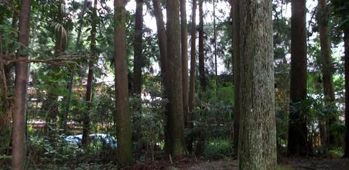 本宮12・林越しに社殿の裏面.jpg