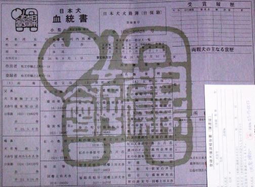 柴犬3・血統書.jpg