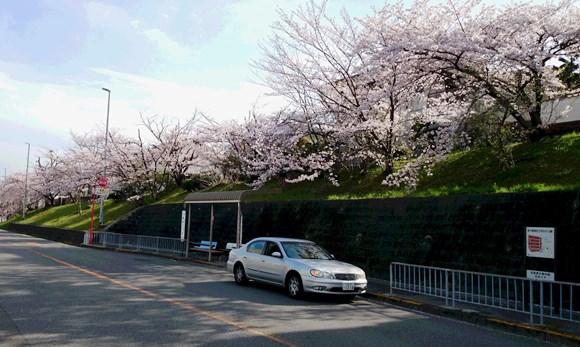 桜13・南町2丁目.jpg