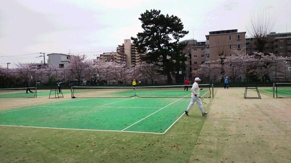 桜2・豊島公園テニスコート.jpg