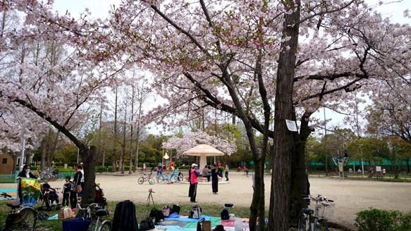 桜3・豊島公園.jpg