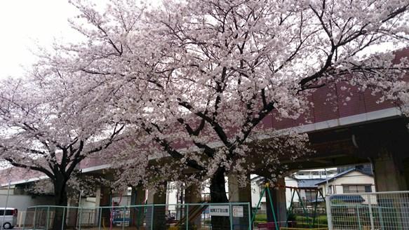 桜5・池田市城南3丁目公園.jpg