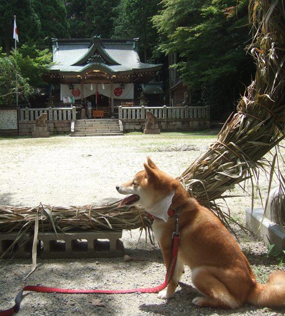 温泉神社6・はな.JPG