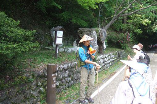 熊野162・秀衡桜34番.jpg