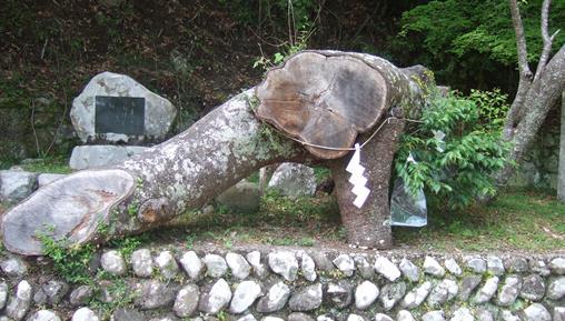 熊野163・秀衡桜.jpg