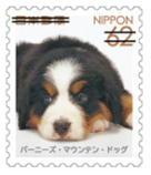犬622.jpg