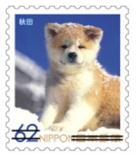 犬623.jpg