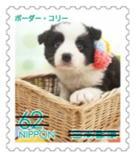 犬627.jpg