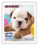 犬629.jpg