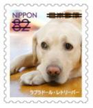 犬821.jpg