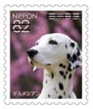 犬8210.jpg