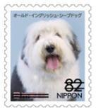 犬824.jpg