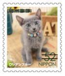 猫5202.jpg