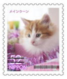 猫5203.jpg