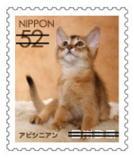 猫5204.jpg