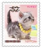 猫5207.jpg