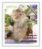 猫5208.jpg