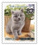 猫8202.jpg