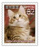 猫8203.jpg