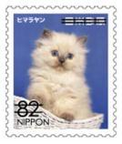 猫8204.jpg