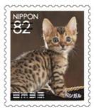 猫8205.jpg