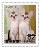 猫8206.jpg