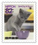 猫8208.jpg