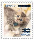 猫8209.jpg