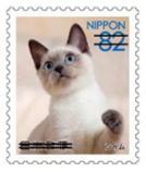 猫8210.jpg