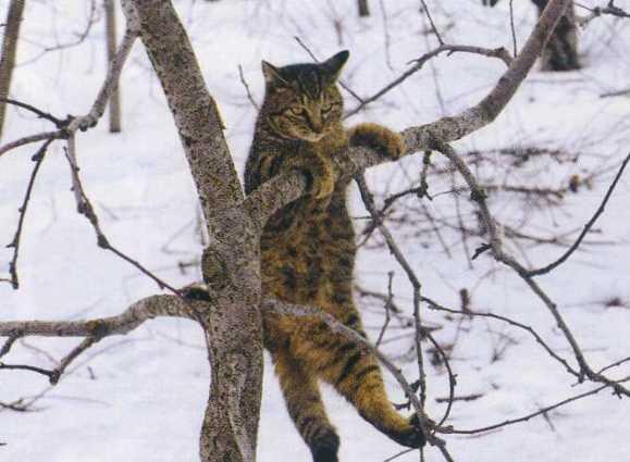 猫10.jpg