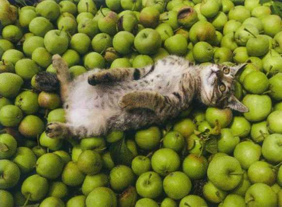 猫11.jpg