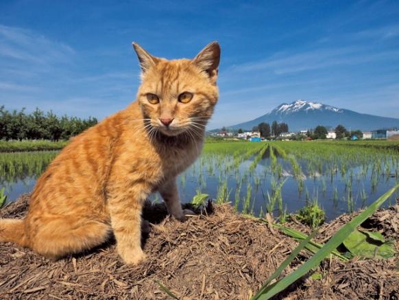猫3.jpg