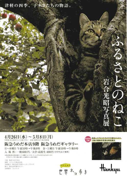 猫6・パンフ.jpg
