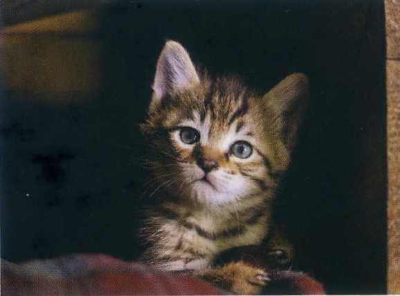 猫9.jpg