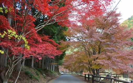 石龕寺4・美しい紅葉路.jpg