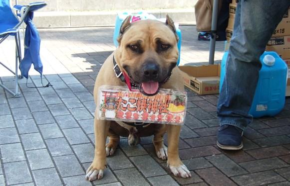 神戸4・看板犬.JPG