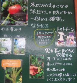 緑・とまと1.JPG